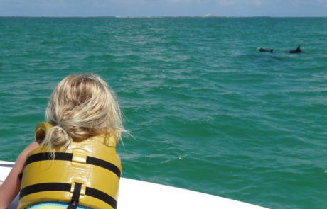 Little girl looking at two dolphin.
